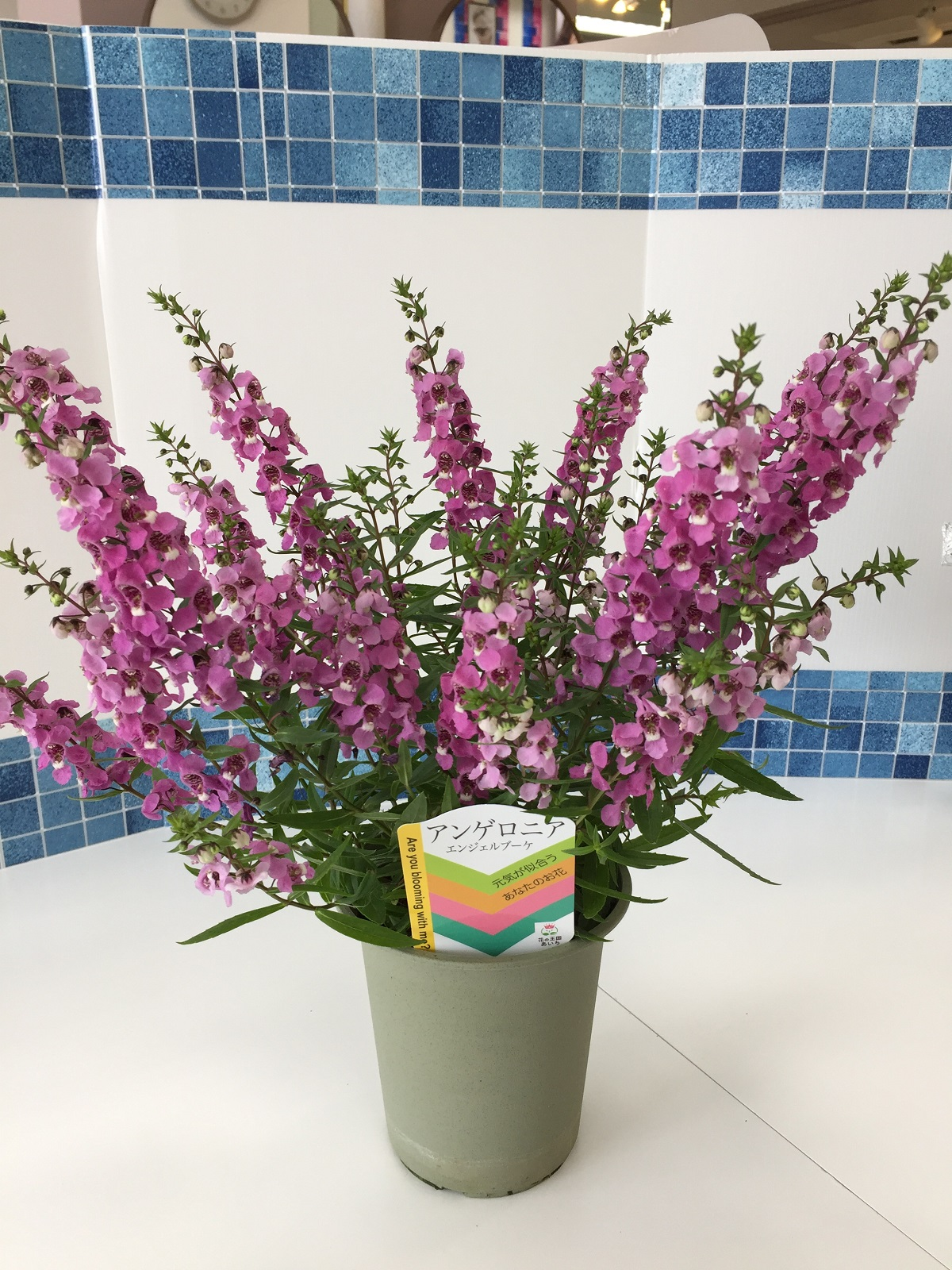 「お花」の取り組みについて✿