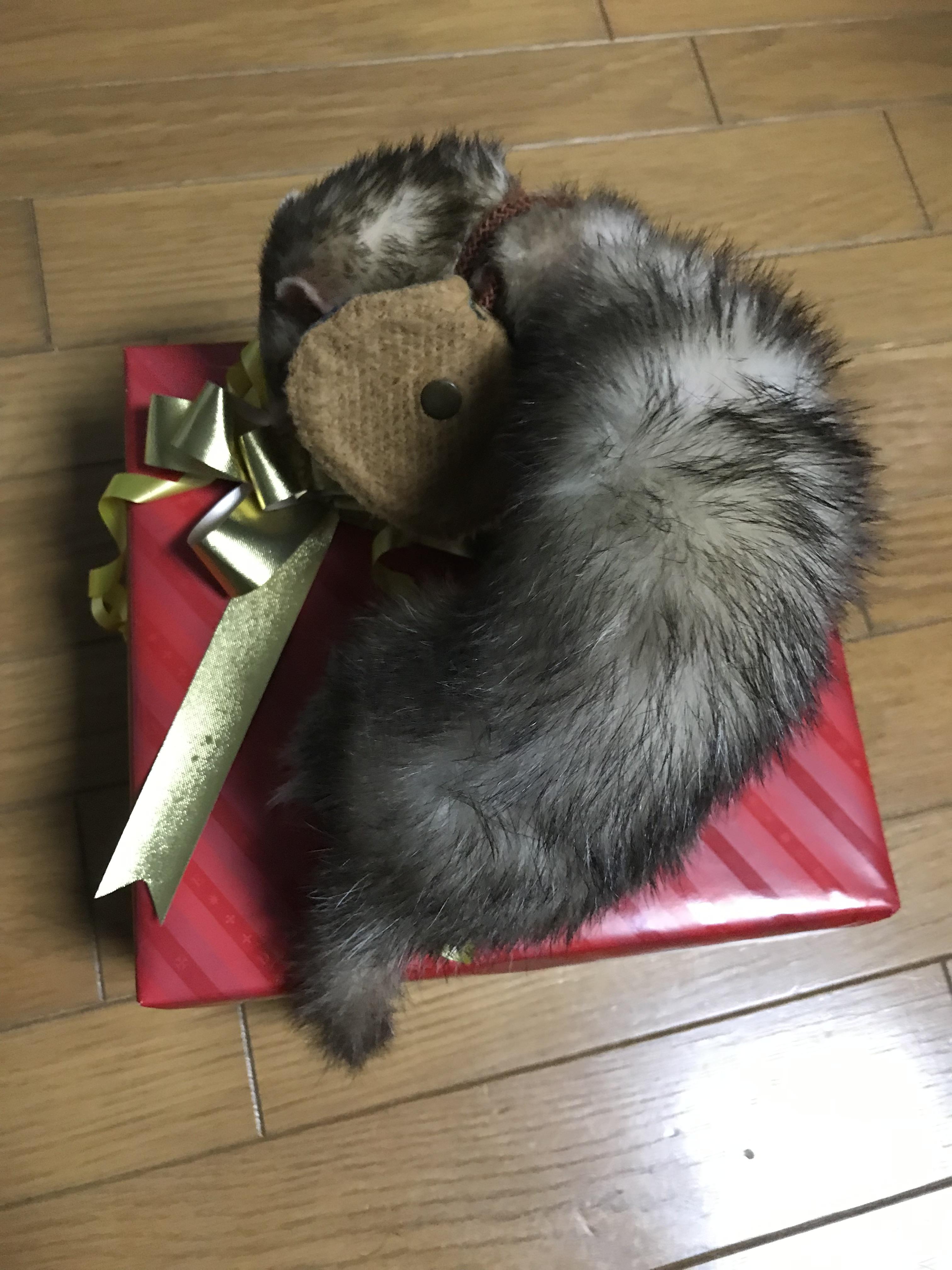 """♪Happy(○´3`)ノ""""┌iiii┐ヾ(´ε`○)Birthday♪"""