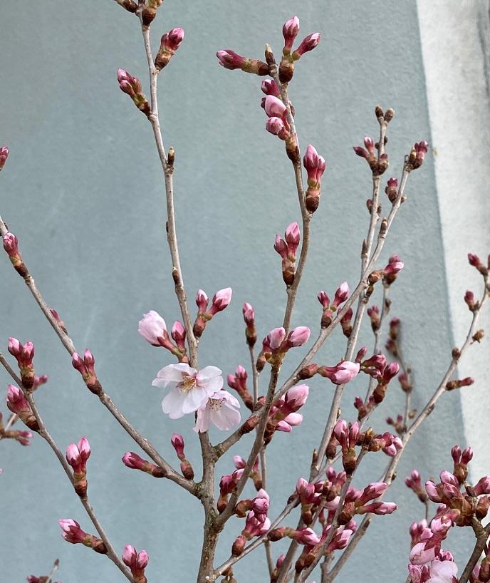 春はもうすぐそこ!!